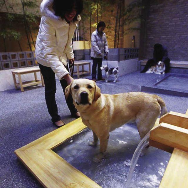 ペット温泉で愛犬もリラックス