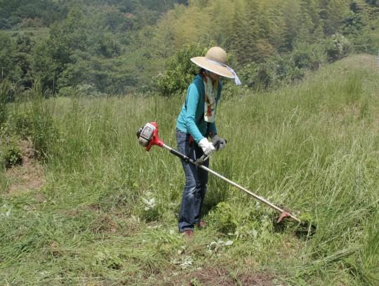刈払い機。肩にベルトをかけて支えながら両手で操作します。わたしはまだ下手くそなんだな!刈った跡がきれいじゃない。地元の方々は実に整然と刈るので、その後草を集めるのが楽です。日々精進。