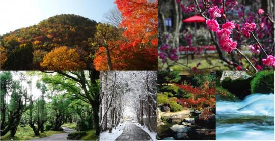しょうざんリゾート京都のお庭を散策するのも魅力のひとつ