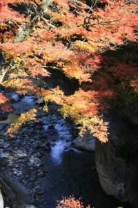 hv-fall-nakatsugawa
