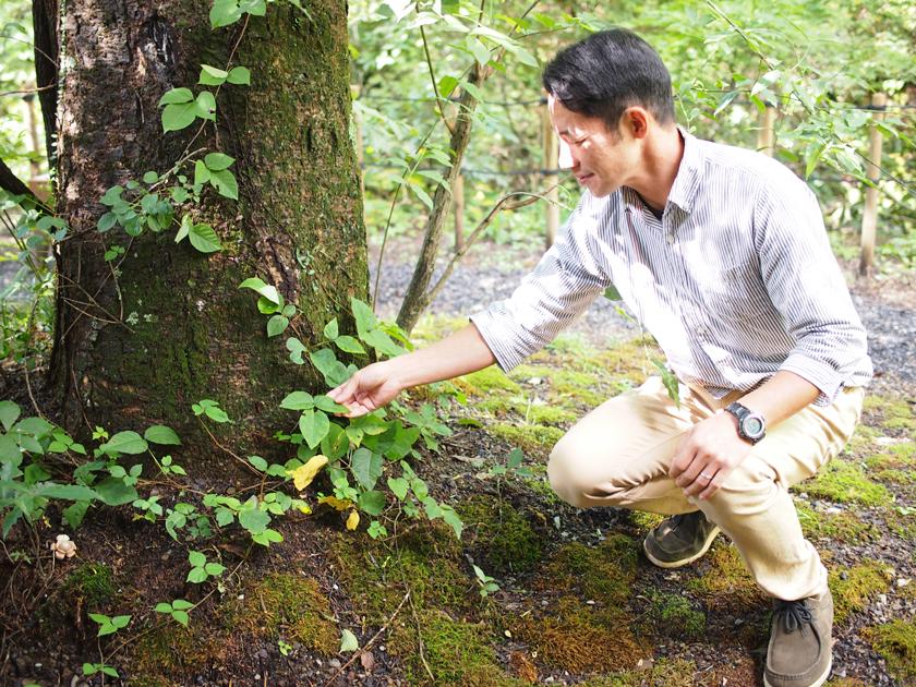 取材中、ウルシの葉にさわりながら説明する堀江さん