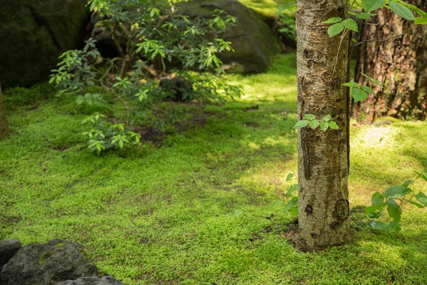手入れが行き届いた、苔が美しい中庭