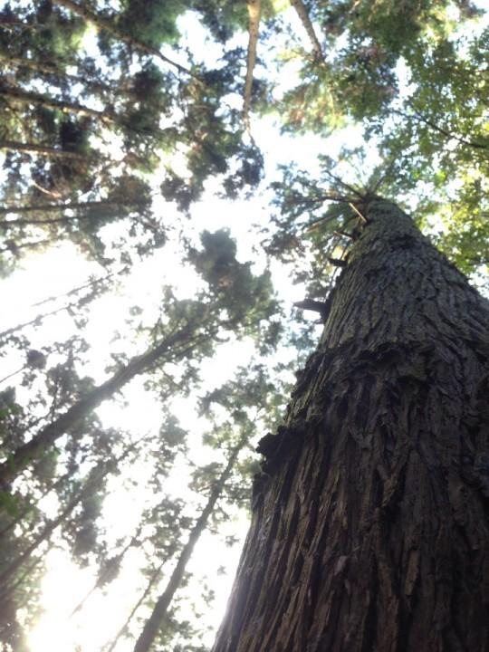 木漏れ日が、遠い。
