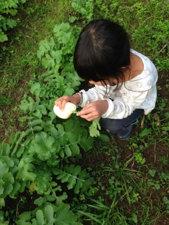 娘なんて畑にマヨネーズ持ってって、野菜の踊り食いです。
