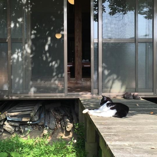 うちもいるよ。休みにはいつも。ネコもいるよ。暑いと、黒い部分は日陰に、白い部分は日なたにするよ。