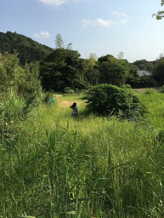 ずいぶん雑草が伸びて道がなくなってる……むこうに、クワの木。