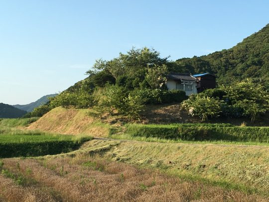 神社の敷地の斜面、本当にきれいに刈ってある。ありがとう。