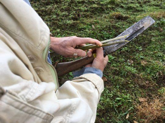 長い竹の先が細工されていく様子には、ワクワクしかない。