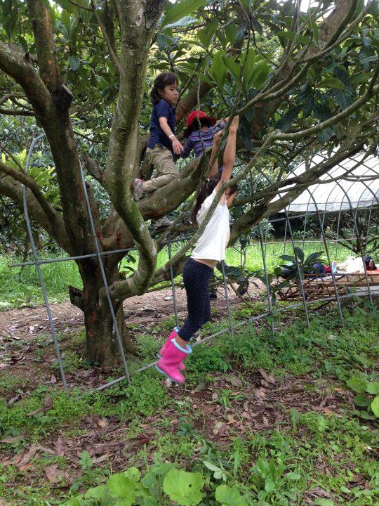 遊具みたいに、木で遊べると楽しいよね。
