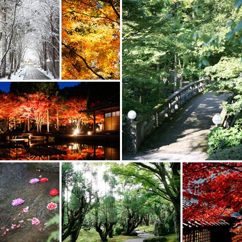 kyoto-takagamine-season