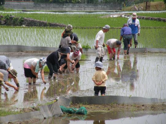 rice_planting
