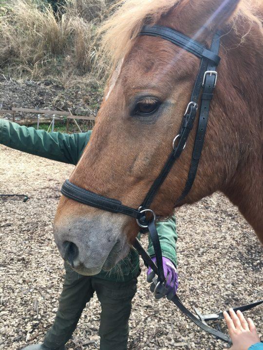 ちなみに馬は、正面から人に見つめられるのが苦手とのこと。自分を喰らう肉食動物と同じ、目が正面についている顔だから、恐怖を感じるらしい。知らないで、まっすぐ見つめてしまった。