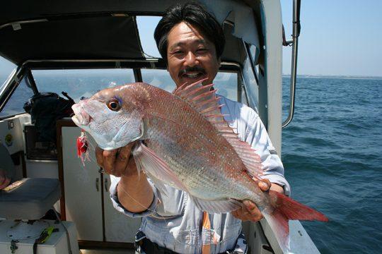 相模湾で釣れたマダイ