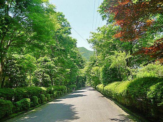 東急箱根仙石原別荘地の街並
