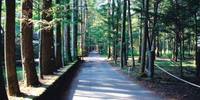 軽井沢の林道