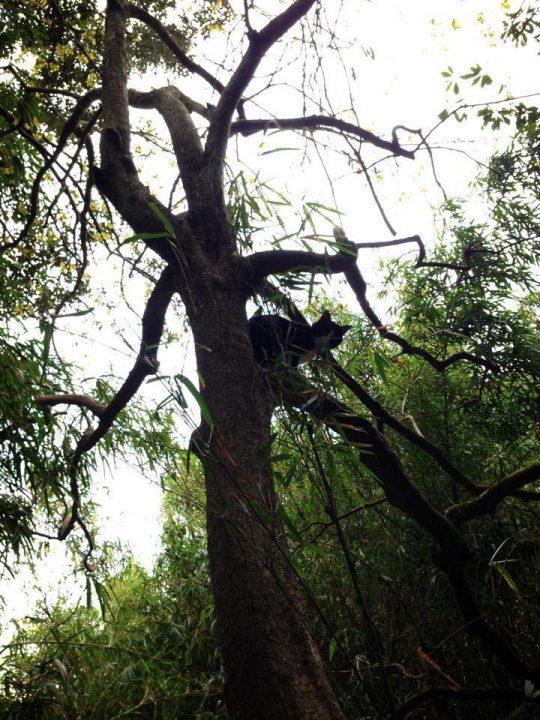 とっても高い木にも、一気に。