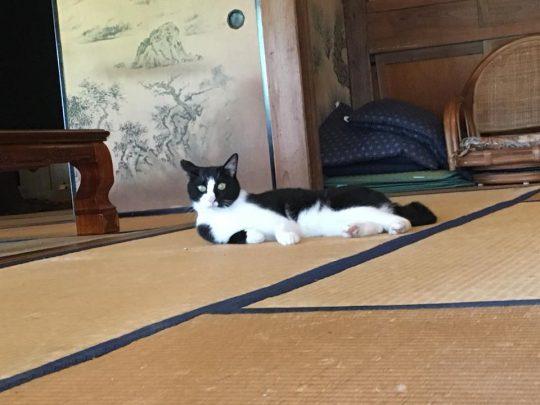 畳の上も好き。