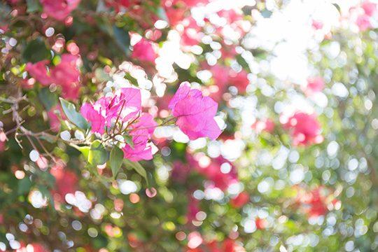 色とりどりの南国の花が咲く離島の風景