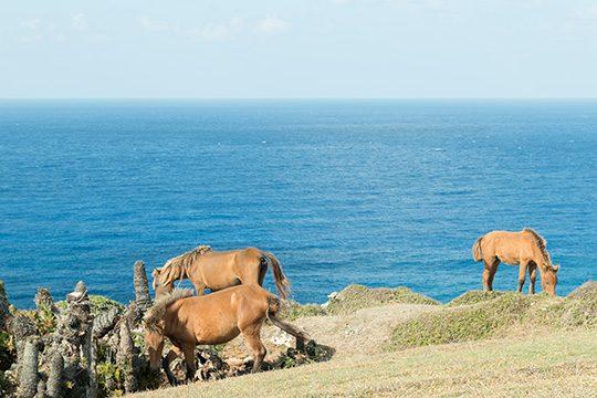 与那国馬が断崖に佇む与那国島の風景