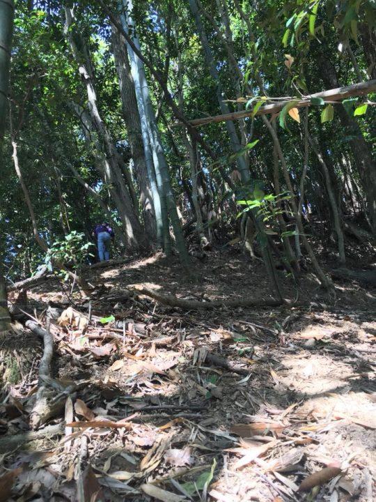 荒れた裏山の、竹林の際までわしわしのぼります。