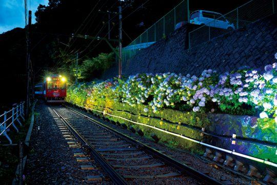 あじさい列車-夜