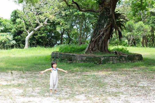 大きなガジュマルの木に、子どもも嬉しそう