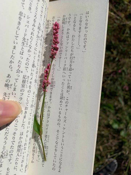 マメの最近の楽しみは、花のしおりづくり。これは、イヌタデの花。