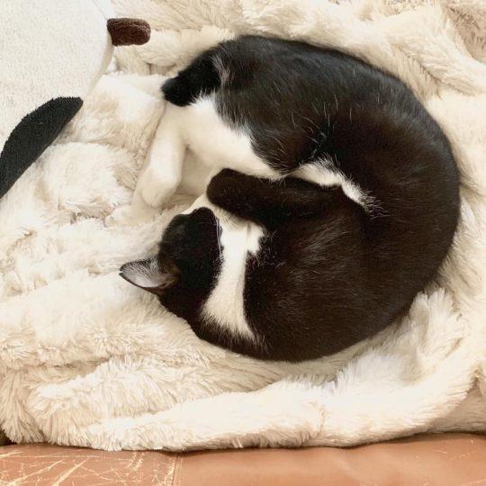 陽だまりで昼寝。いいな。1年に30回くらい、本気でネコになりたいと思う時がある。