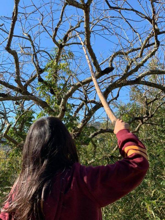 とっても高い、柿の木にひっかかっちゃったよ。一番長い竹を探して、枝を落として、くいっくいっと。難しい。