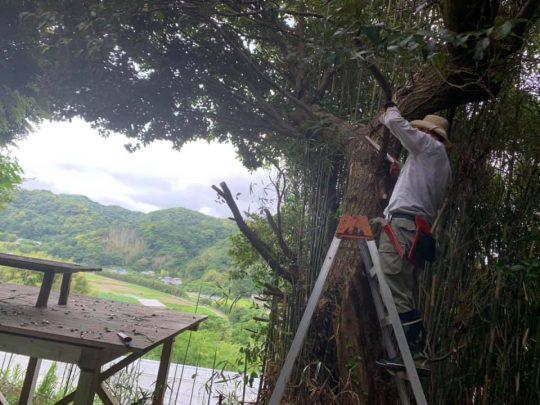 先日は、友人に手伝ってもらって木の剪定(せんてい)や竹の伐採を行いました。広い土地の管理って、2人でやると3倍以上はかどるんですよね。実はこの作業は楽しいです。くたびれますが!