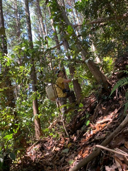 決して急いではいませんが、ムダな休憩はなし。ハアハアと息が切れます。わたしはそれくらいマッチョな登山が結構好き。