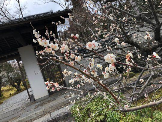 京都鷹峯の早春