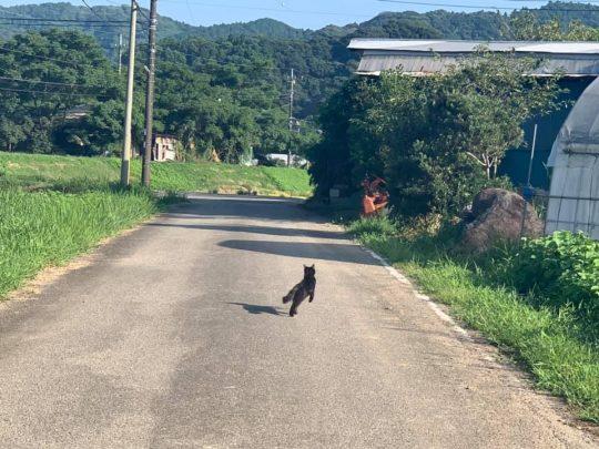 真っ黒な子猫兄弟が3匹、それぞれ走り出した。なんてかわいいんだ。