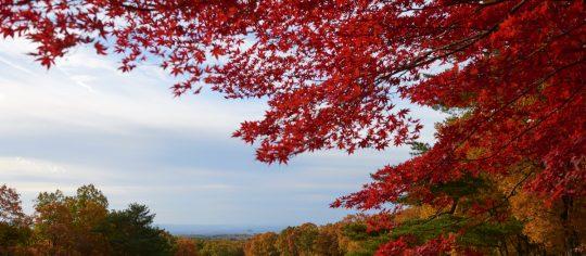 秋色に染まる那須
