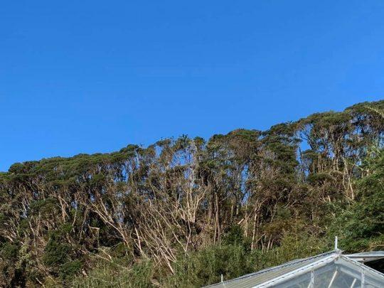 うちの裏山。みっしり茂っていた木々がなぎ倒され、こんなスカスカになりました。まだ山の中には入れていません。