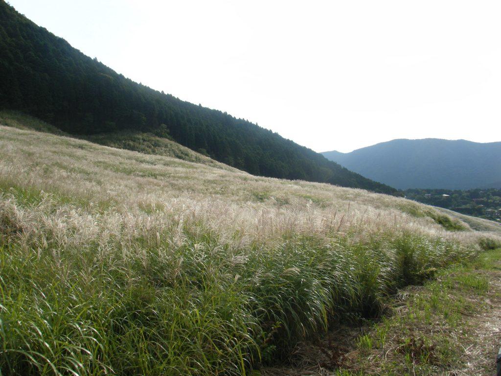 VIALA箱根翡翠仙石原のすすき