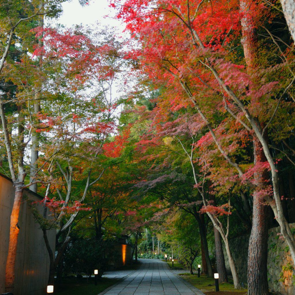 京都鷹峯&VIALAへ向かうしょうざんリゾート京都の小径