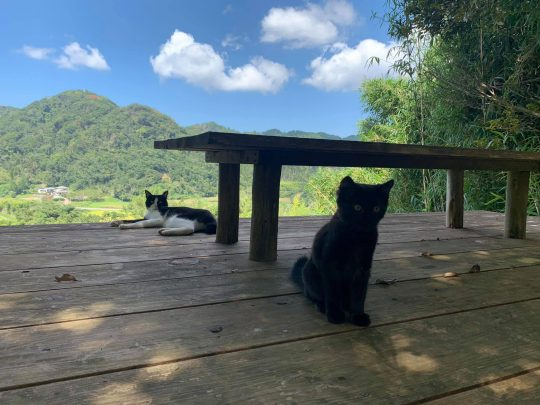 うちではネコが増え、つまり二地域居住の構成員が増えました。「まっくろ」と言います。先住ネコの「くろ」より黒いんで。2匹で丁々発止やってます。