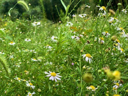 繁茂する雑草。でもこれ、「お花畑」ですよね。