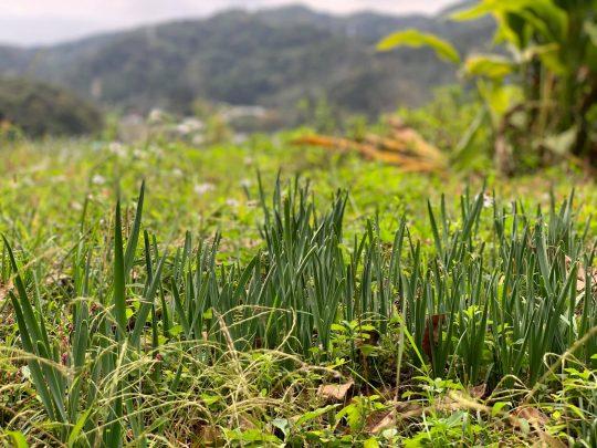 まだぽかぽかだった11月の初め、水仙の芽吹きに喜びました。