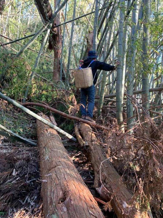 以前、西山さんと無理矢理山に入って土を採ったこともあったな。到達できないポイントに良土があり、やるせなかった。
