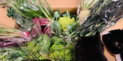 館山の安西農園さんのイタリア野菜BOXをオンラインで注文。これは嬉しい。色とりどりの野菜を手にすると俄然いろいろと料理する気になります。・・・てことは、料理は頑張ってたんだ。笑。